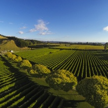 Waihuka source block, Manutuke, Gisborne