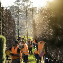 Waihuka source block - the team harvesting scionwood